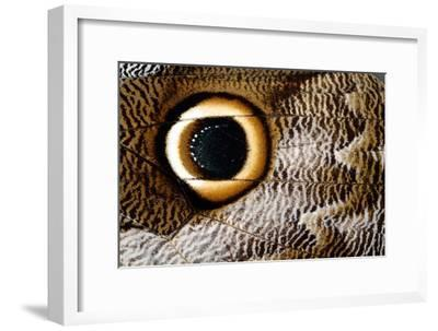Macrophotograph of Owl Butterfly Wing-Dr. Keith Wheeler-Framed Photographic Print