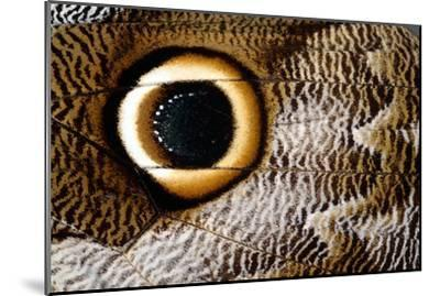 Macrophotograph of Owl Butterfly Wing-Dr. Keith Wheeler-Mounted Photographic Print