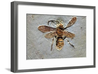 Wasp Fossil-Dirk Wiersma-Framed Photographic Print