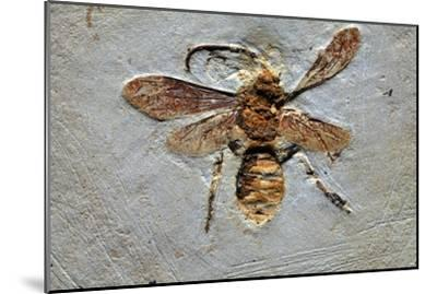Wasp Fossil-Dirk Wiersma-Mounted Photographic Print
