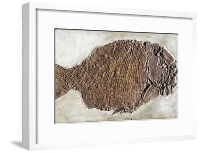 Fossil Fish, Dapedium Punctatus-Dirk Wiersma-Framed Photographic Print
