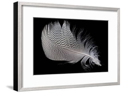 Goose Feather-Dirk Wiersma-Framed Photographic Print