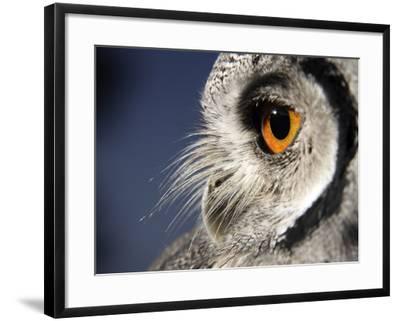 White-faced Scops Owl Eye-Linda Wright-Framed Photographic Print