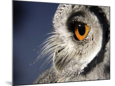 White-faced Scops Owl Eye-Linda Wright-Mounted Photographic Print