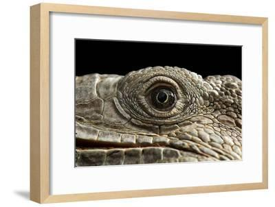 Iguana Eye-Linda Wright-Framed Photographic Print