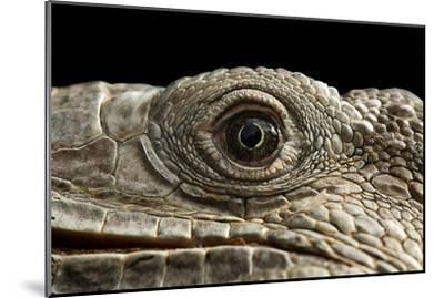 Iguana Eye-Linda Wright-Mounted Photographic Print