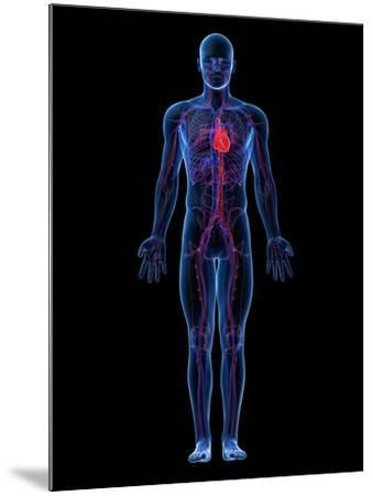 Cardiovascular System, Artwork-SCIEPRO-Mounted Photographic Print