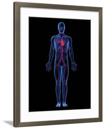Cardiovascular System, Artwork-SCIEPRO-Framed Photographic Print
