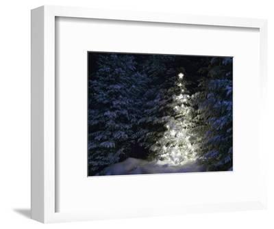 Illuminated Christmas Tree in Snow-Larry Williams-Framed Photographic Print