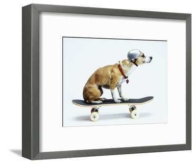 Dog with Helmet Skateboarding-Chris Rogers-Framed Photographic Print