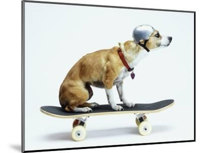 Dog with Helmet Skateboarding-Chris Rogers-Mounted Photographic Print
