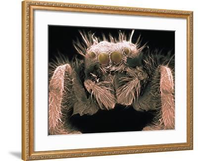 Microscopic View of Spider-Jim Zuckerman-Framed Photographic Print
