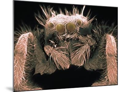 Microscopic View of Spider-Jim Zuckerman-Mounted Photographic Print
