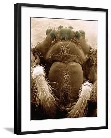 Microscopic View of Black Widow-Jim Zuckerman-Framed Photographic Print