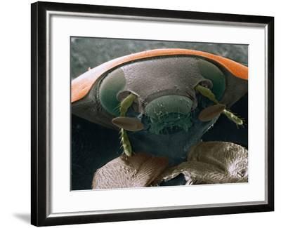 Microscopic View of Ladybug-Jim Zuckerman-Framed Photographic Print