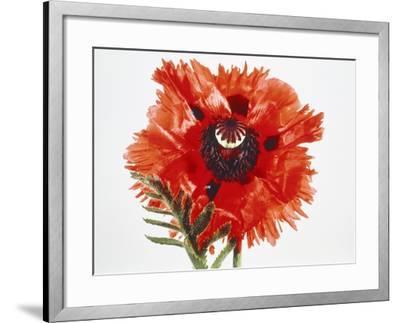 Red poppy blossom-Josh Westrich-Framed Photographic Print