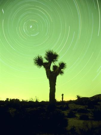 USA, California, Joshua Tree National Park and star trails at night-Frank Lukasseck-Framed Photographic Print