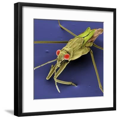 Pondskater--Framed Photographic Print