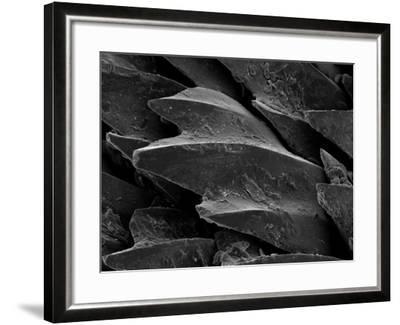 Shark Skin Scale--Framed Photographic Print