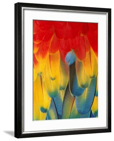 Red and yellow macaw-Theo Allofs-Framed Photographic Print