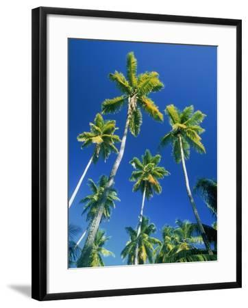 Palm trees, Seychelles, Africa-Frank Krahmer-Framed Photographic Print