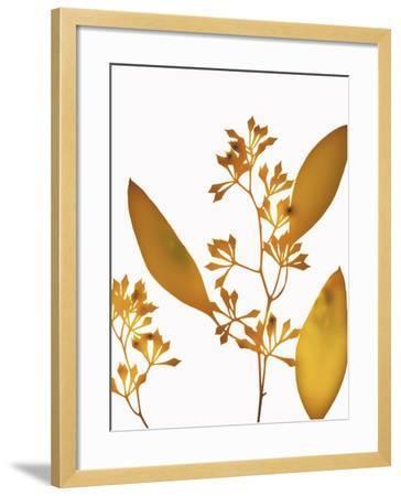 Yellow Eucalyptus-Envision-Framed Photographic Print