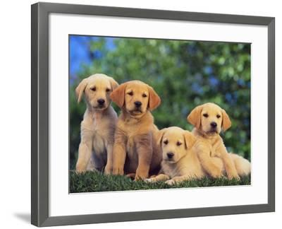 Puppies--Framed Photographic Print