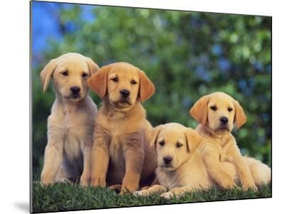 Puppies--Mounted Photographic Print
