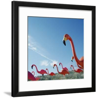 Pink flamingo lawn ornaments--Framed Photographic Print