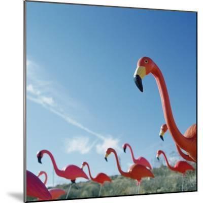 Pink flamingo lawn ornaments--Mounted Photographic Print
