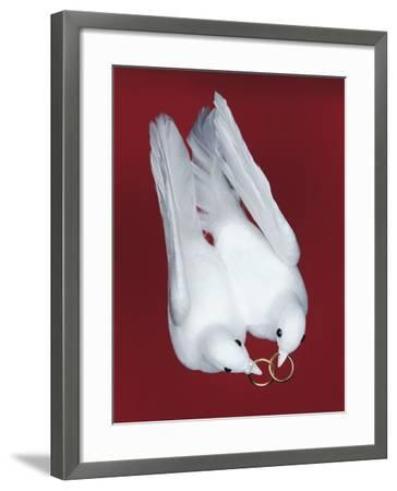Artificial Wedding Doves-Josh Westrich-Framed Photographic Print