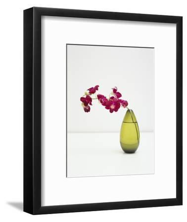 Orchid Flower in a Vase-Estelle Klawitter-Framed Photographic Print