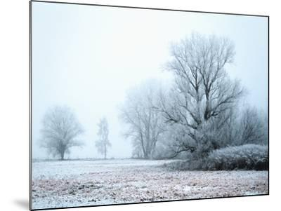 A Meadow in Winter--Mounted Photographic Print