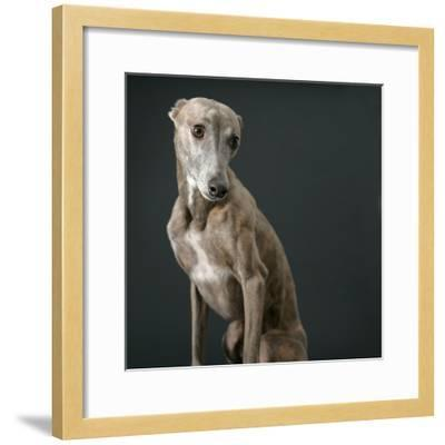 Whippet-Parque-Framed Photographic Print