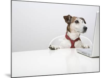 Dog in Front of Laptop at Desk-Ursula Klawitter-Mounted Photographic Print