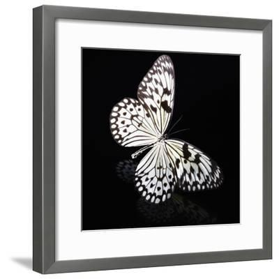Butterfly-Sean Justice-Framed Photographic Print