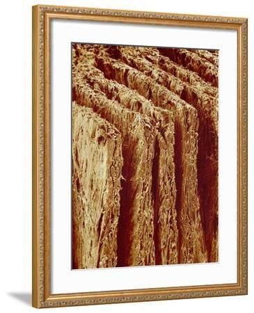 Edges of Book Pages-Micro Discovery-Framed Photographic Print