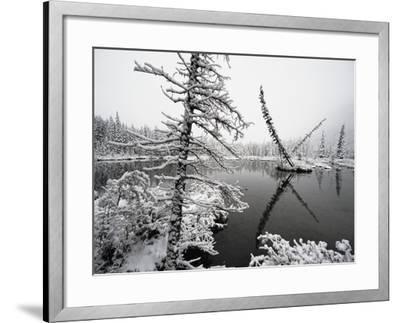 Pond and Forest in Winter-John Eastcott & Yva Momatiuk-Framed Photographic Print