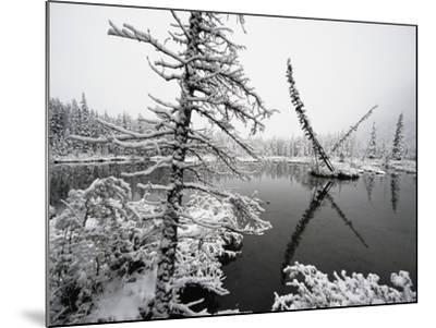 Pond and Forest in Winter-John Eastcott & Yva Momatiuk-Mounted Photographic Print