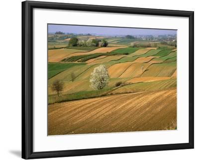 Agricultural Fields on Farm-John Eastcott & Yva Momatiuk-Framed Photographic Print