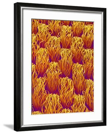 Cloth of a Brassiere Strap-Micro Discovery-Framed Photographic Print
