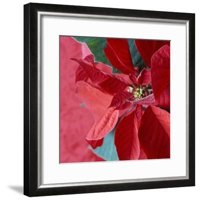 Christmas Decorations-Sean Justice-Framed Photographic Print