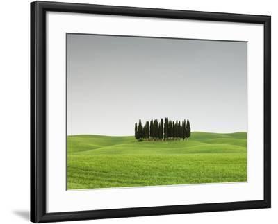 Cypress Grove in Field-Sergio Pitamitz-Framed Photographic Print