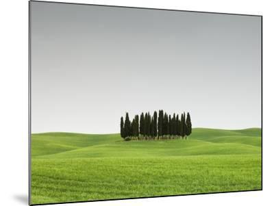 Cypress Grove in Field-Sergio Pitamitz-Mounted Photographic Print