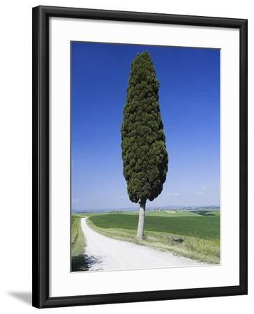 Cypress Tree by Unpaved Road-Frank Lukasseck-Framed Photographic Print