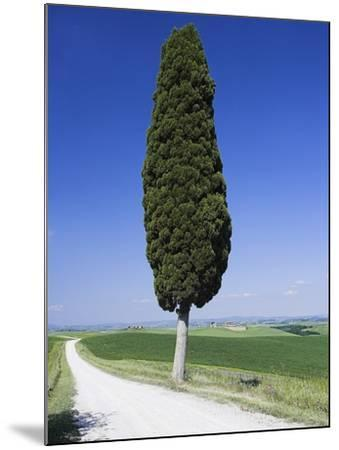 Cypress Tree by Unpaved Road-Frank Lukasseck-Mounted Photographic Print