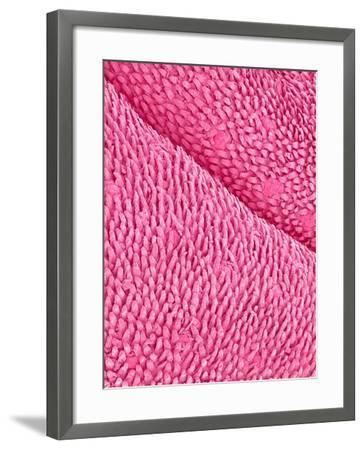 Mouse Tongue-Micro Discovery-Framed Photographic Print