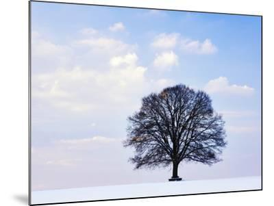 Oak Tree in Winter-Frank Lukasseck-Mounted Photographic Print