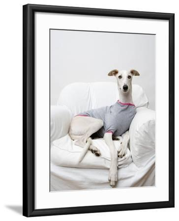 Greyhound Wearing a T-Shirt-Estelle Klawitter-Framed Photographic Print