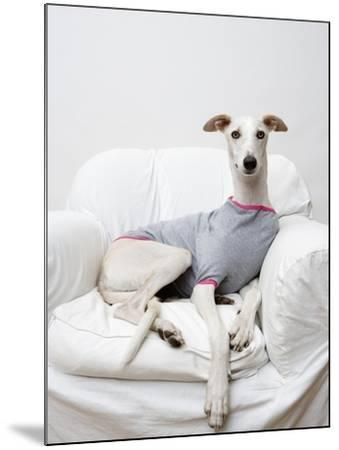 Greyhound Wearing a T-Shirt-Estelle Klawitter-Mounted Photographic Print